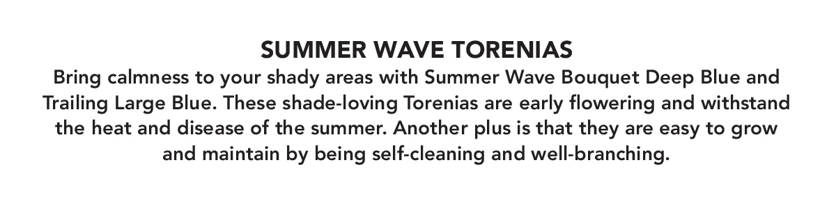 SUMMER WAVE TORENIAS. Bring calmness to your shady areas with Summer Wave Bouquet Deep Blue and Trailing Large Blue.
