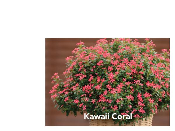 Kawaii Coral