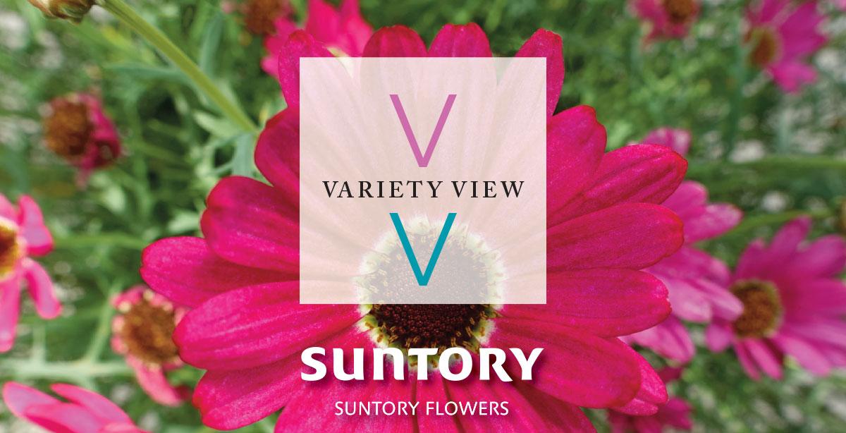Suntory Flowers Variety View