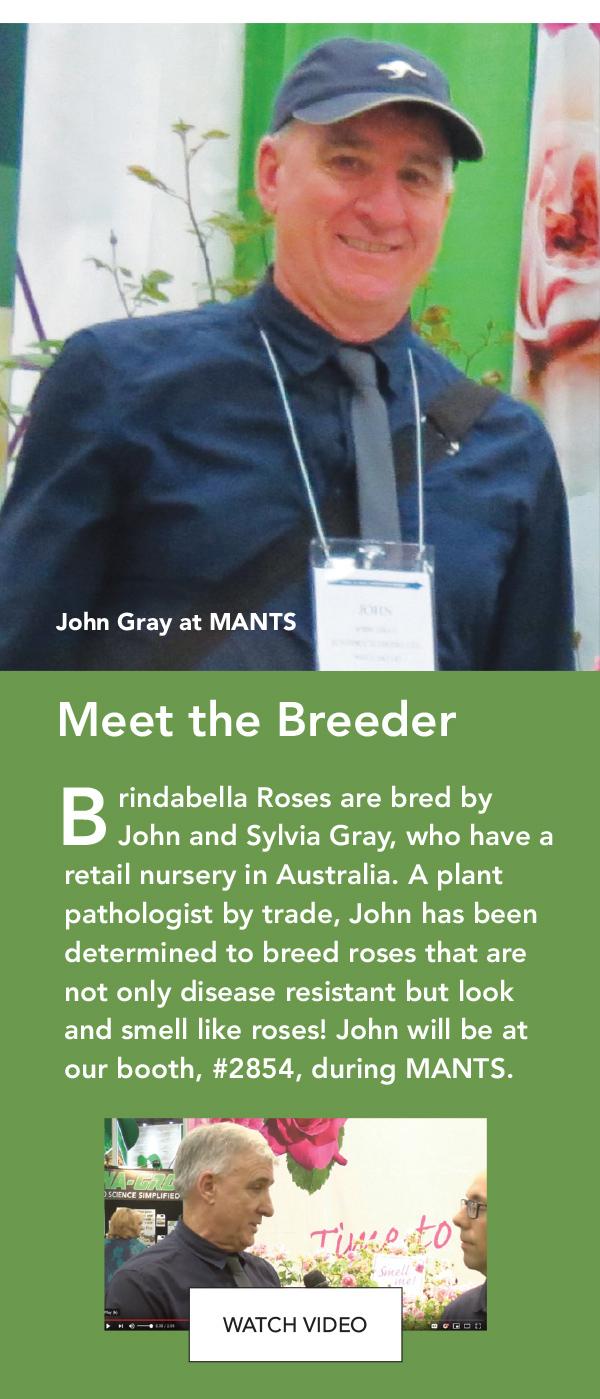 Brindabella Roses are bred by John and Sylvia Gray.