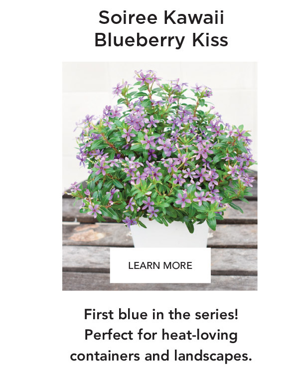 Soiree Kawaii Blueberry Kiss