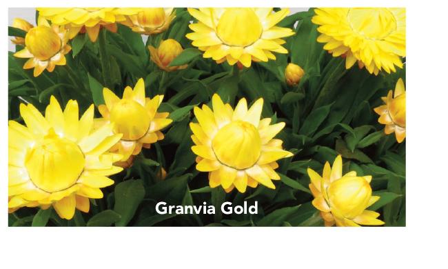 Suntory Granvia Gold