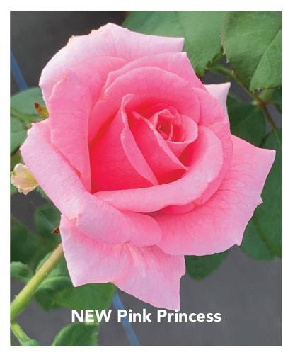 NEW! Brindabella Pink Princess