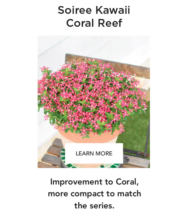 Soiree Kawaii Coral Reef