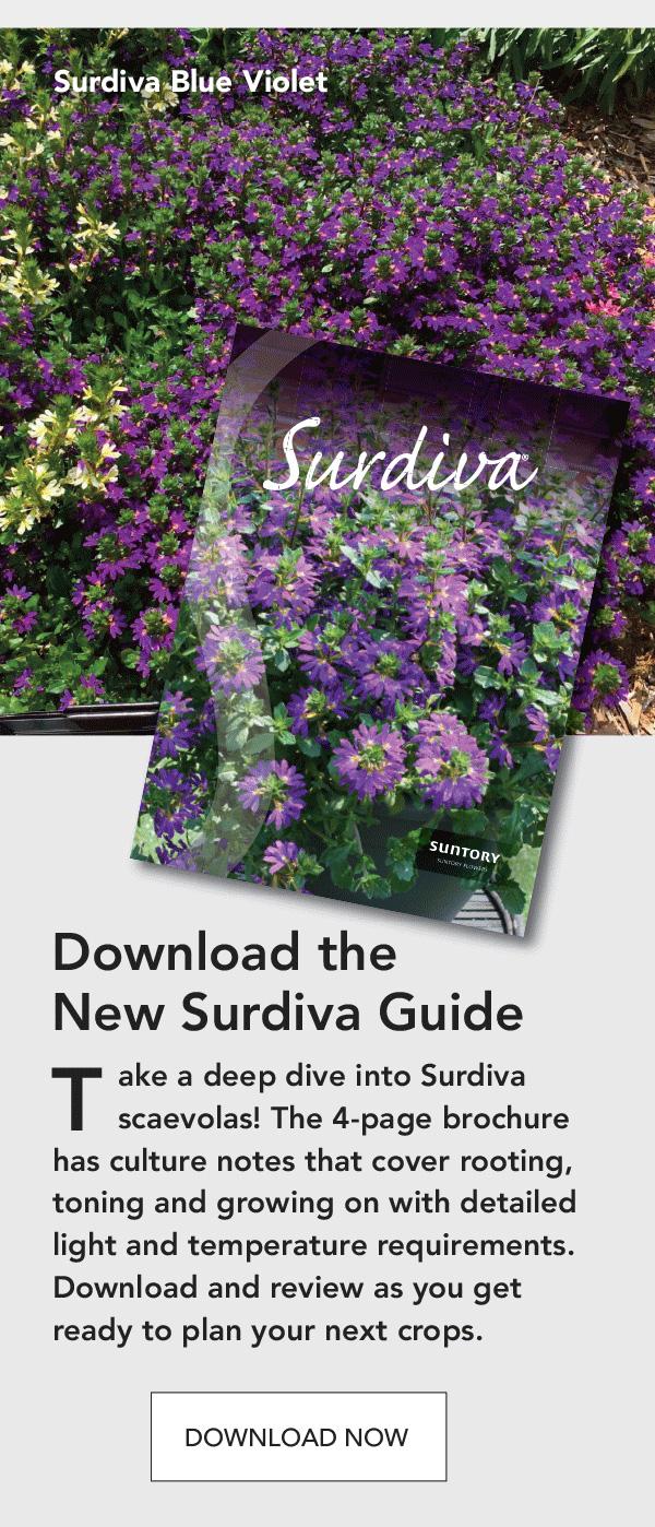 Download the new Surdiva Guide: