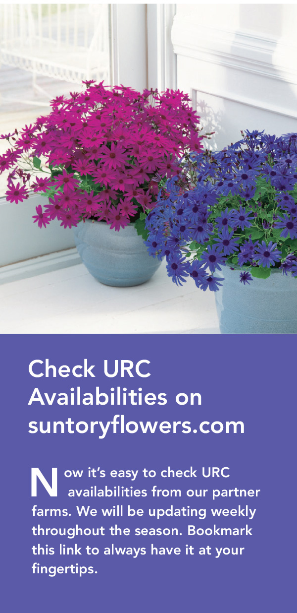 Check Suntory Flowers URC Availabilities