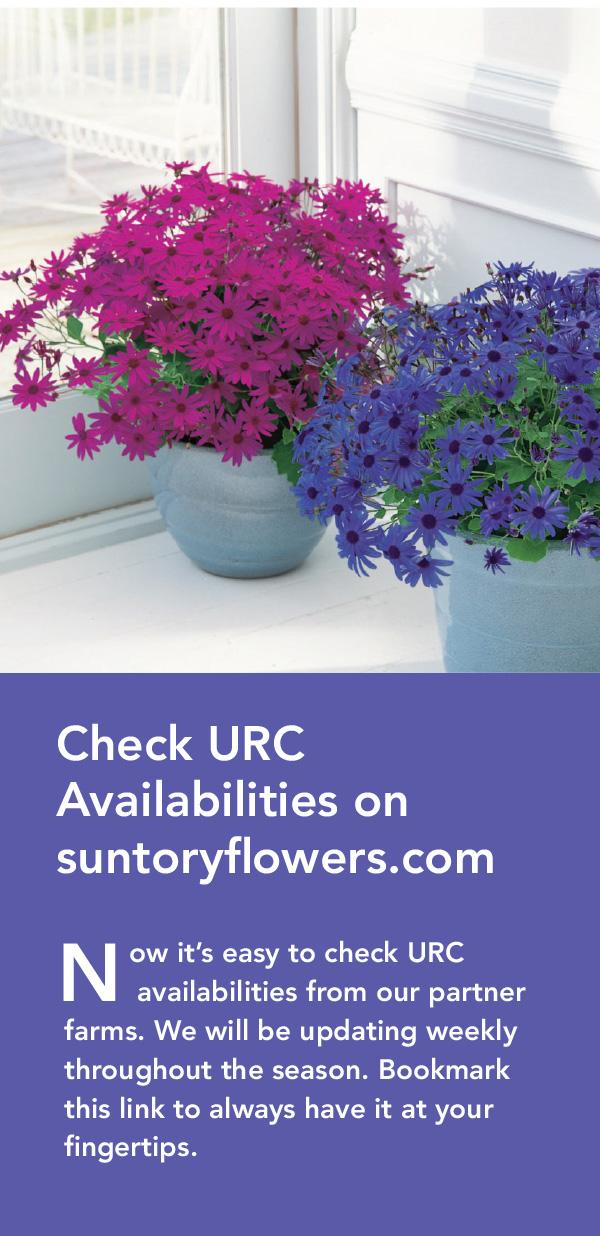 Check Suntory Flowers URC Availabilities