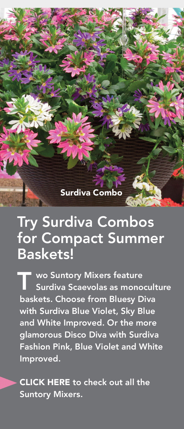 Try Surdiva combos for compact summer baskets.