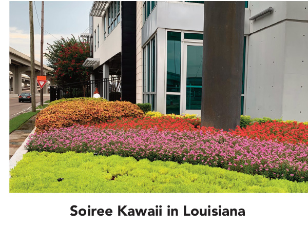 Suntory Soiree Kawaii in Louisiana
