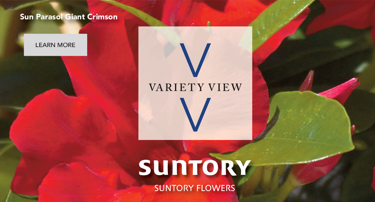 Suntory Flowers Variety View – Join Us in Florida for TPIE