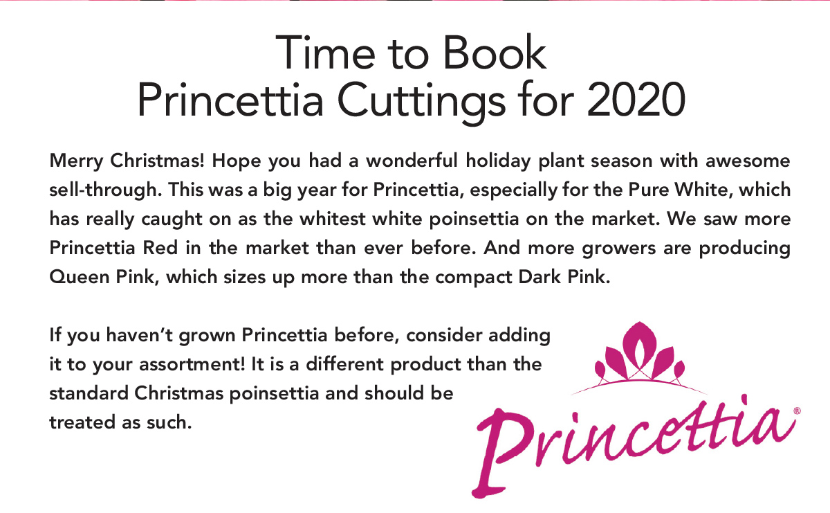 Time to Book Princettia Cuttings for 2020. Merry Christmas! Hope you had a wonderful holiday plant season with awesome sell-through.