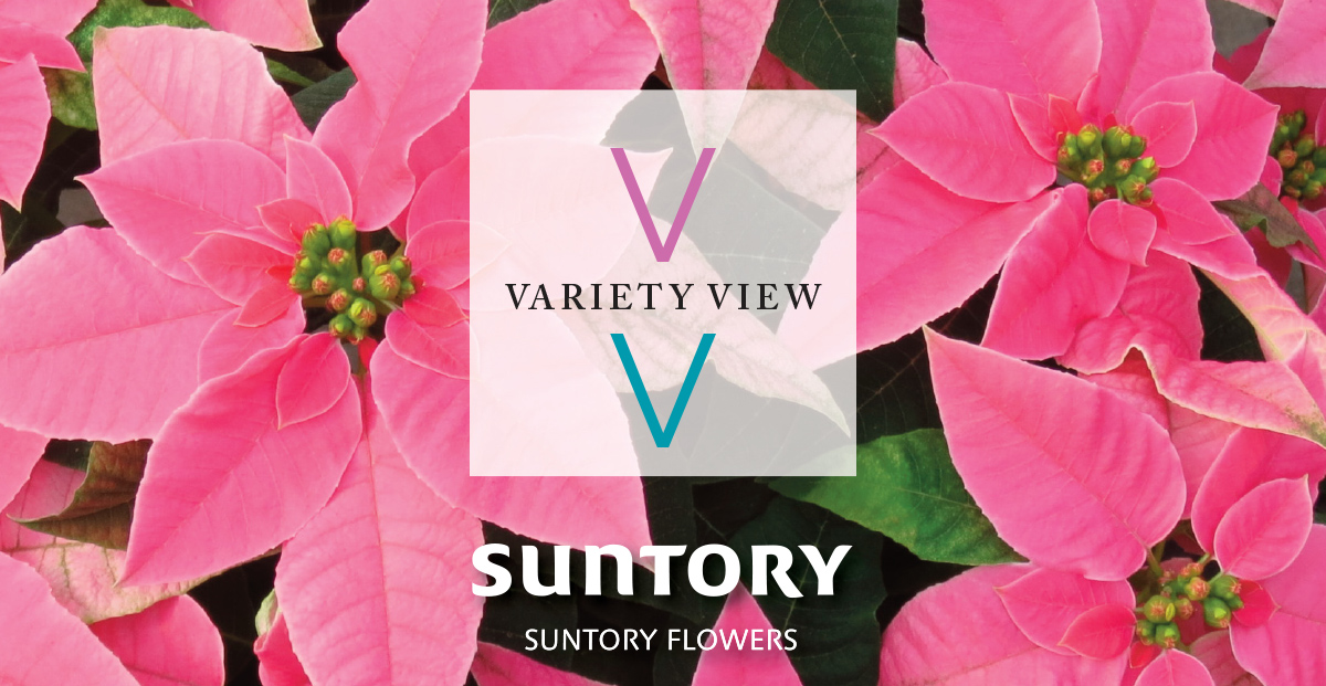 Suntory Flowers - Time to Rebook Princettia
