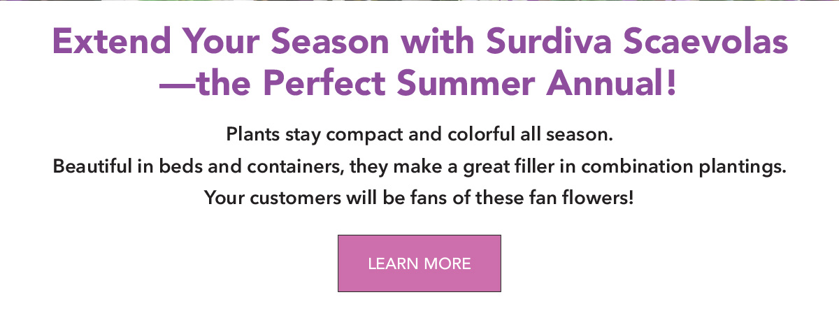 Extend Your Season with Suntory Flowers Surdiva Scaevolas – the perfect summer annual!