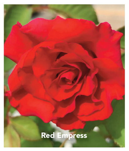 Red Empress