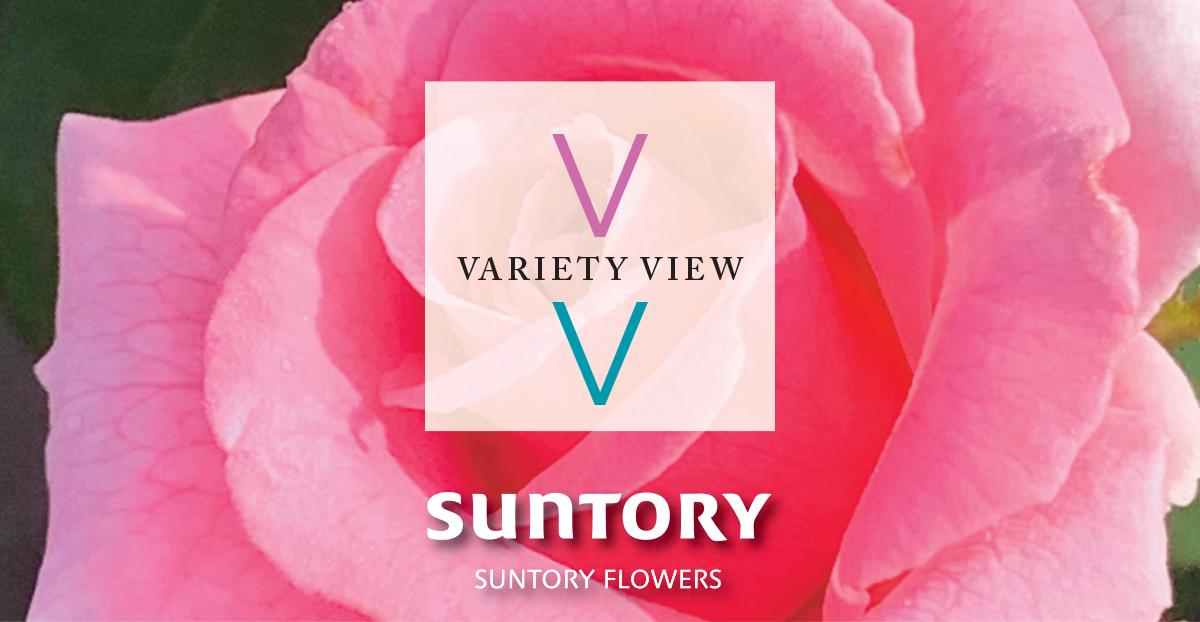 Suntory Variety View