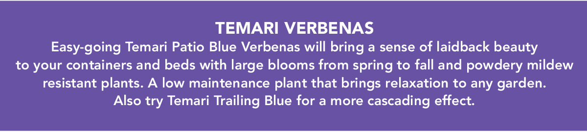 TEMARI VERBENAS. Easy-going Temari Patio Blue Verbenas will bring a sense of laidback beauty to your containers and beds with large blooms from spring to fall and powdery mildew resistant plants.