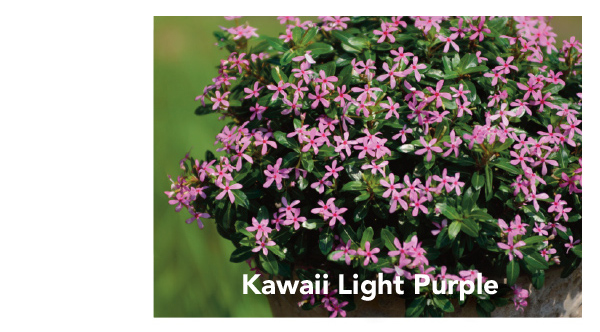 Kawaii Light Purple
