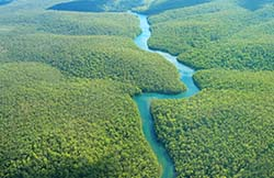 Aerial view of river winding through rainforest