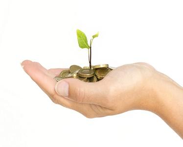 PMS-Money-Plant