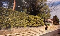 Koshi no Kanbai Bamboo Fence
