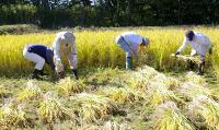 Kurosawa Brewery Rice