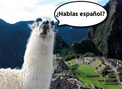 "Lama fragt ""Hablas espanol"""