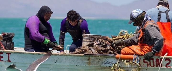 Basurto Fisheries
