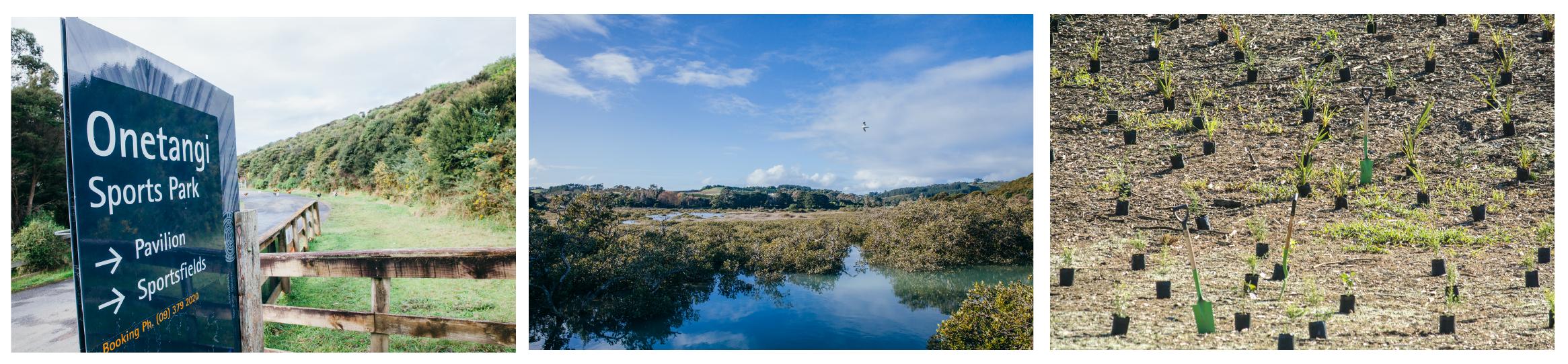 e9bf2faa 02e6 44bd bf50 abfa5b10d1e5 - Tree Planting on Waiheke Island