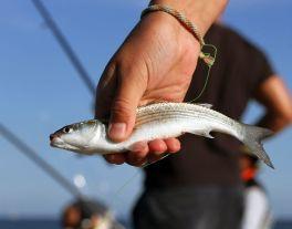 Produktivní investice do akvakultury