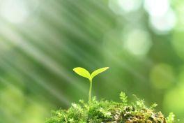 Národní program Životní prostředí