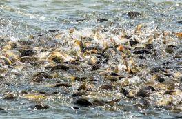 OP Rybářství 2.3. Podpora nových chovatelů