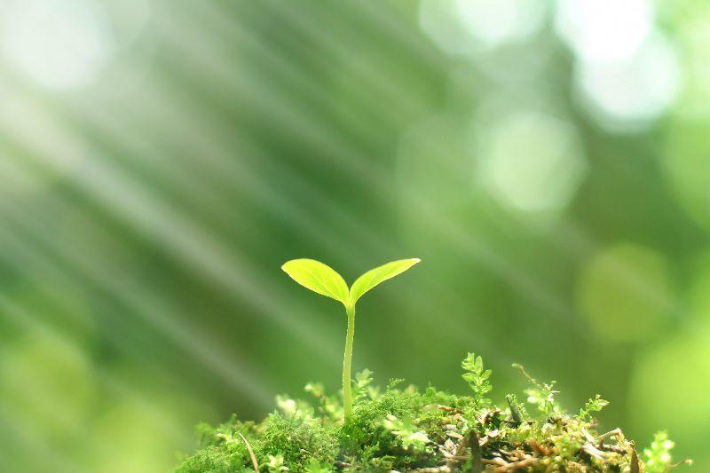 Národní program Životní prostředí – Inovativní a demonstrační projekty