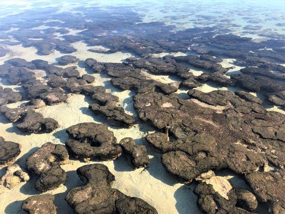 stromatolites formed of microbial mats, Western Australia