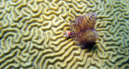 Coral Reef (Photo: US Geological Survey)