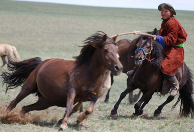 Goyo Travel - Group Tours to Mongolia