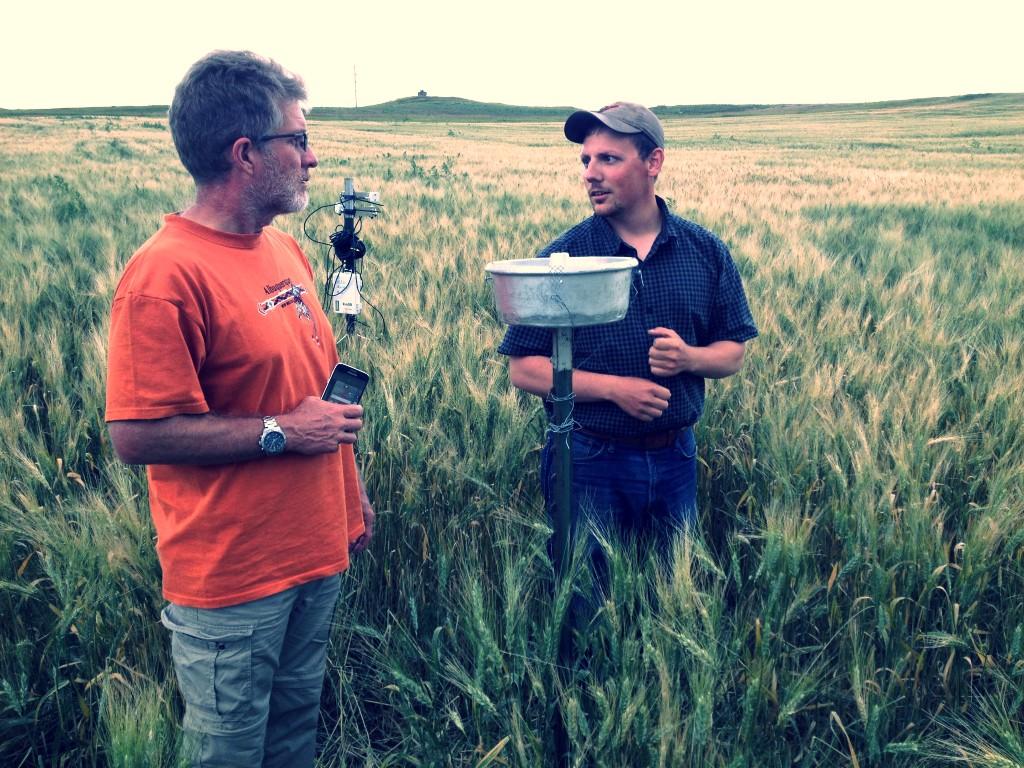 Bakken wheat