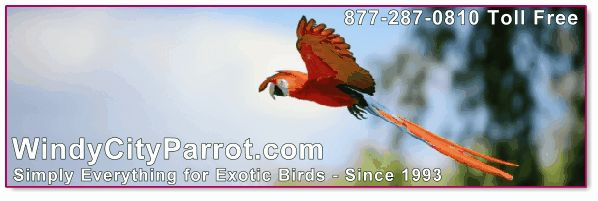 Macaw Parrot flying right to left