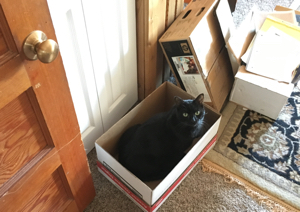 Smokey in a box