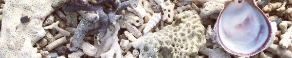 Sea shells and pieces of coral
