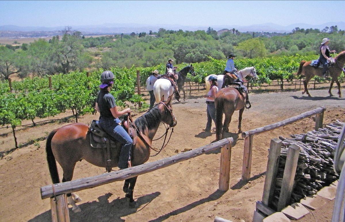 Riders on horseback at Woof'n Rose Winery