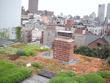 A Green Roof in New York City