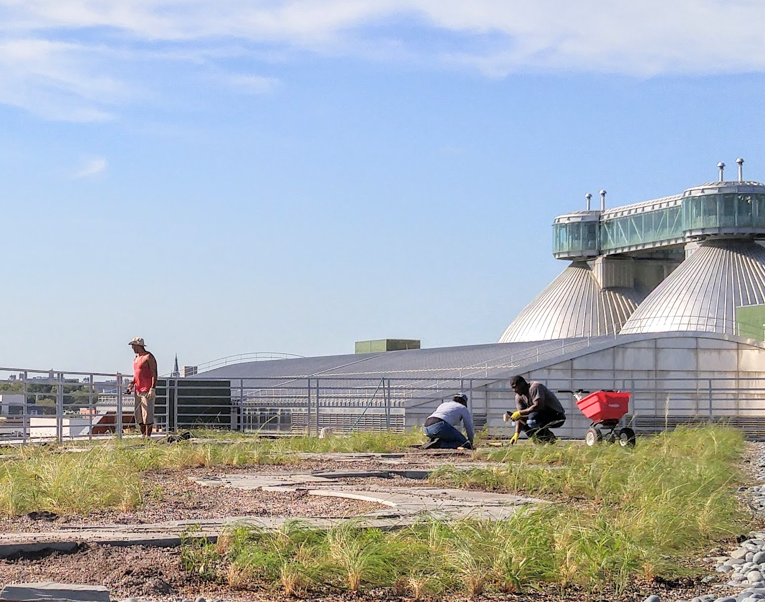 Greenpoint's New Green Roof, Currently Under Construction © NYC Audubon