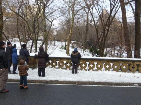 Central Park Christmas Count Teams Admire a Cooperative Red-tailed Hawk. Photo © NYC Audubon