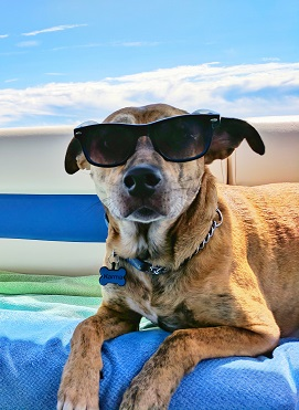 Keep pets cool this summer!