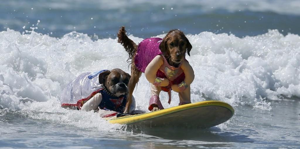 Surf Doggo