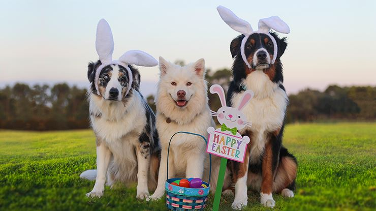 9th Annual Easter Egg Hunt for Dogs