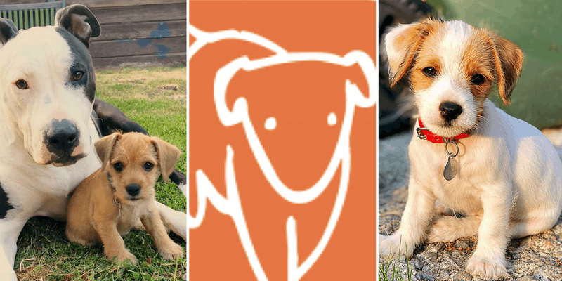 Underground Generosity: National Dog Day with Copper's Dream