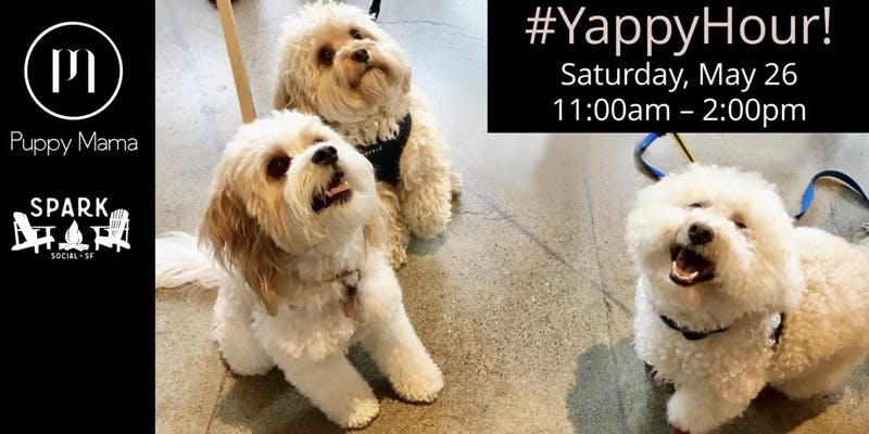 Yappy Hour at Spark Social!
