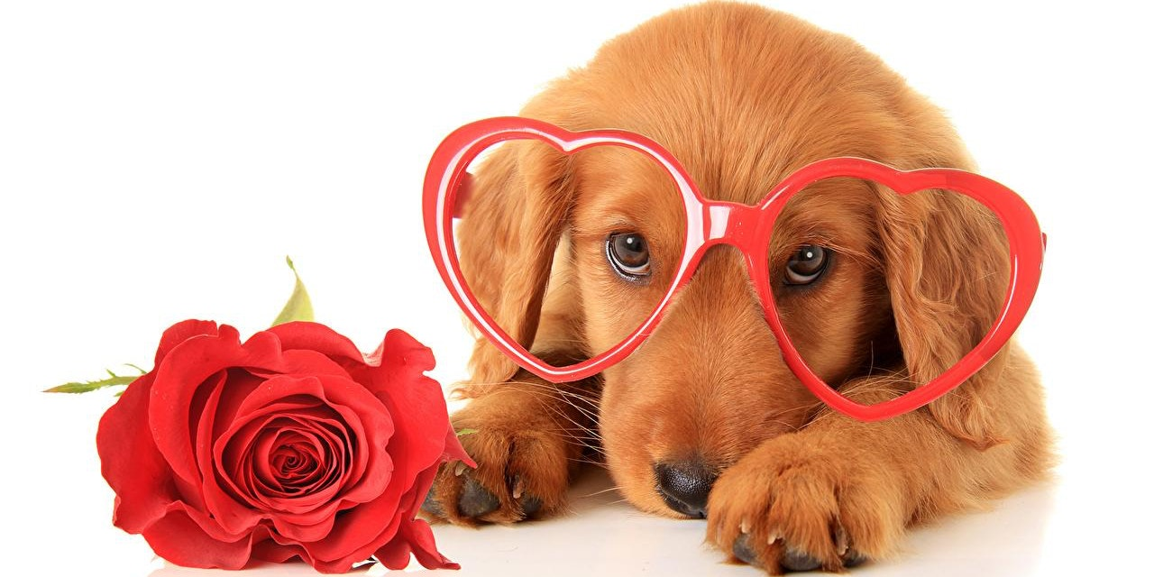 Puppy Love: A Valentine's Day Weekend Dog Gathering