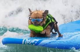 Surf Pupper